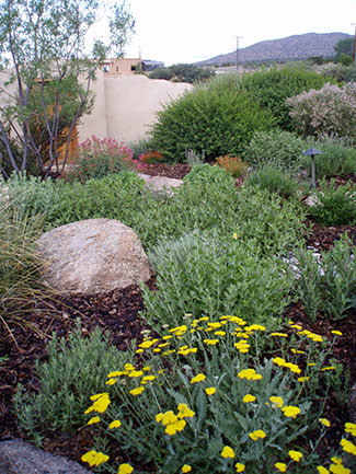 Waterwise landscapes inc landscapes page 5 for Landscaping rocks albuquerque