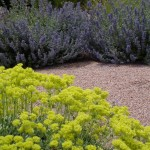 Sulfur Buckwheat & Catmint