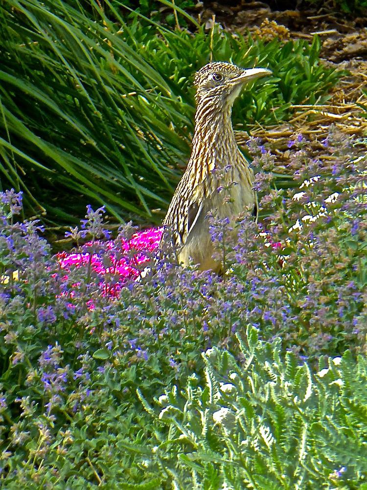 Wildlife / Garden
